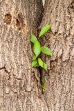 Μια πράσινη ανάπτυξη νεαρών βλαστών δέντρων Στοκ Εικόνα