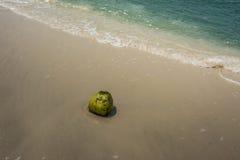 Μια πράσινη καρύδα στην άμμο Στοκ Εικόνα