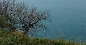 Μια πράσινη χλόη και ένα γραφικό ελεύθερο δέντρο φύλλων σε ένα μπλε κλίμα θάλασσας απόθεμα βίντεο