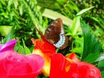 Μια πραγματική πεταλούδα σε ένα τεχνητό λουλούδι Στοκ εικόνα με δικαίωμα ελεύθερης χρήσης