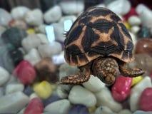 Μια πραγματική χελώνα στοκ εικόνες με δικαίωμα ελεύθερης χρήσης