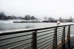 Μια πυκνή ομίχλη κάλυψε την πόλη της Νέας Υόρκης κατά τη διάρκεια της χειμερινής ` s ημέρας τον Ιανουάριο του 2018 στοκ εικόνες