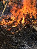 Μια πυρά προσκόπων Στοκ Εικόνες