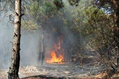Μια πυρκαγιά Στοκ Εικόνες