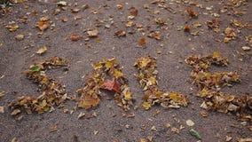 Μια πώληση λέξης είναι αποτελούμενη από τα κίτρινα φύλλα σε μια αλέα φθινοπώρου απόθεμα βίντεο