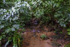 Μια ροή του νερού στη ζούγκλα Στοκ Εικόνες