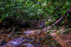 Μια ροή του νερού στη ζούγκλα Στοκ Φωτογραφίες