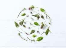 Μια ρύθμιση της άνοιξη φυτεύει και λουλούδια στοκ φωτογραφίες με δικαίωμα ελεύθερης χρήσης