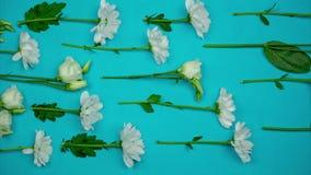 Μια σειρά άσπρων λουλουδιών που κινούνται σε μια κατεύθυνση r απόθεμα βίντεο