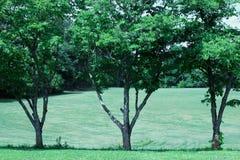 Μια σειρά τριών δέντρων σε μια περιοχή λιβαδιών στοκ φωτογραφία