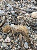 Μια σειρά των συστάσεων στην παραλία Στοκ Φωτογραφία