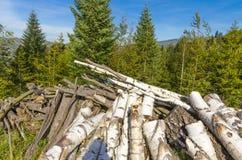 Μια σημύδα woodpile στην επαρχία στοκ φωτογραφία με δικαίωμα ελεύθερης χρήσης