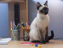 Μια σιαμέζα γάτα κάθεται στοκ φωτογραφία