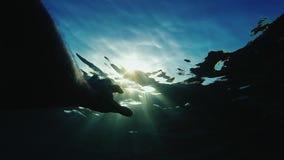 Μια σκιαγραφία ενός αρσενικού μπισκότου φτάνει στις ακτίνες του ήλιου κάτω από το νερό Έννοια - πίστη, ελπίδα, θρησκεία απόθεμα βίντεο