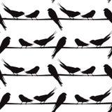 Μια σκιαγραφία των πουλιών σε ένα καλώδιο, διάνυσμα Στοκ Εικόνα