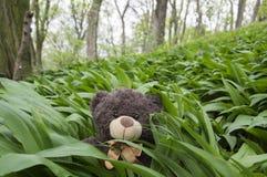 Μια σκοτεινή καφετιά teddy συνεδρίαση baer στο σκόρδο αρκούδων Στοκ εικόνα με δικαίωμα ελεύθερης χρήσης