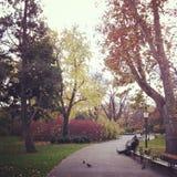 Μια στιγμή του ειδυλλίου σε Stadtpark, Βιέννη στοκ φωτογραφία με δικαίωμα ελεύθερης χρήσης