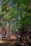 Μια συμπαθητική πορεία μέσω του δάσους Στοκ Εικόνα
