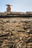 Μια συνεδρίαση πουλιών hoopoe πάνω από ένα σπίτι πετρών στοκ εικόνα με δικαίωμα ελεύθερης χρήσης