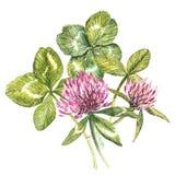 Μια σύνθεση των κόκκινων λουλουδιών και των φύλλων τριφυλλιού - ένα quatrefoil και ένα τριφύλλι Βοτανικές απεικονίσεις Watercolor ελεύθερη απεικόνιση δικαιώματος
