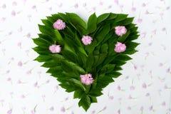 Μια σύνθεση των φύλλων και των λουλουδιών - μια πράσινη καρδιά με το ρόδινο ΛΦ Στοκ εικόνα με δικαίωμα ελεύθερης χρήσης