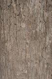 Μια σύσταση του καφετιού φλοιού δέντρων Στοκ εικόνα με δικαίωμα ελεύθερης χρήσης