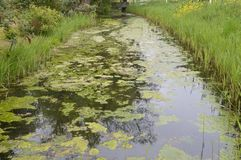 Μια τάφρος με Waterplants Στοκ εικόνα με δικαίωμα ελεύθερης χρήσης