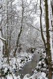 Μια τάφρος στο δάσος το χειμώνα στοκ φωτογραφίες