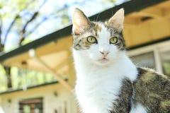Μια τιγρέ γάτα κατοικίδιων ζώων στοκ εικόνα