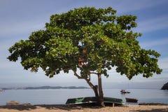 Μια τροπική παραλία στο νησί Paqueta Στοκ Εικόνες