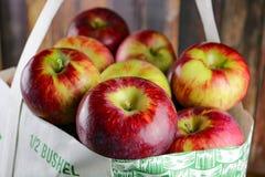 Μια τσάντα των πρόσφατα επιλεγμένων μήλων στοκ εικόνα