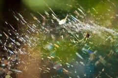 Μια υφαίνοντας αράχνη γραμμών στο δίχτυ του στοκ φωτογραφίες