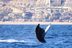 Μια φάλαινα κτυπά την ουρά της επάνω μετά από μια ήρεμη κατάδυση Στοκ Εικόνες