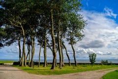 Μια φανταστική άποψη μέσω των δέντρων στη θάλασσα στοκ φωτογραφία με δικαίωμα ελεύθερης χρήσης