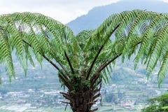 Μια φτέρη στο τροπικό δάσος στο τροπικό μαγικό νησί Μπαλί, Ινδονησία Στοκ εικόνα με δικαίωμα ελεύθερης χρήσης