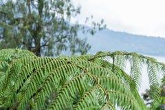 Μια φτέρη στο τροπικό δάσος στο τροπικό μαγικό νησί Μπαλί, Ινδονησία Στοκ φωτογραφίες με δικαίωμα ελεύθερης χρήσης