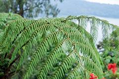 Μια φτέρη στο τροπικό δάσος στο τροπικό μαγικό νησί Μπαλί, Ινδονησία Στοκ εικόνες με δικαίωμα ελεύθερης χρήσης