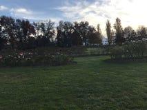 Μια φυτεία με τριανταφυλλιές στοκ εικόνα