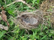 Μια φωλιά για τα πουλιά φιαγμένα από χλόη και μαλλί κάνετε ένα σπίτι για τους νεοσσούς στοκ φωτογραφία