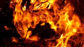 Μια φωτεινή πυρκαγιά στην ακτή Μαύρης Θάλασσας βαθιά τη νύχτα στην slo-Mo απόθεμα βίντεο