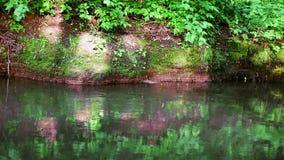 Μια φωτεινή ροή ποταμών απόθεμα βίντεο