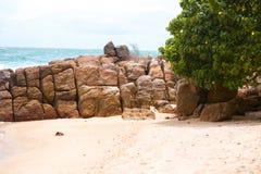 Μια φωτεινή ωκεάνια παραλία με τους φοίνικες και τους βράχους ηλιόλουστος καιρός στοκ εικόνες