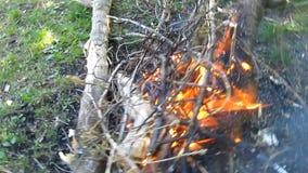 Μια φωτιά από τα ξηρά εγκαύματα κλάδων στην ημέρα στο δάσος στο ξέφωτο - 19s απόθεμα βίντεο