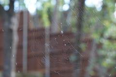 Μια φωτογραφία μιας αράχνης spinys στο Τέξας στοκ εικόνες