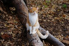 Μια φωτογραφία μιας κίτρινης τιγρέ γάτας στοκ φωτογραφίες με δικαίωμα ελεύθερης χρήσης