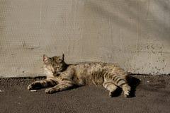 Μια χαλάρωση γατών Στοκ Εικόνα