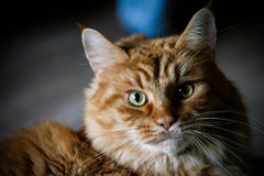 Μια χαριτωμένη γάτα κάθεται στο πάτωμα στοκ εικόνες