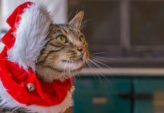 Μια χαριτωμένη γάτα σε ένα κόκκινο καπέλο Santa Στοκ Εικόνες