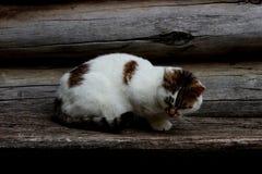 Μια χαριτωμένη γάτα στοκ εικόνα με δικαίωμα ελεύθερης χρήσης