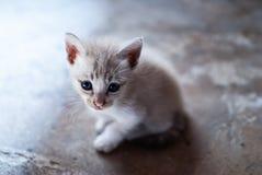 Μια χαριτωμένη γάτα Στοκ φωτογραφία με δικαίωμα ελεύθερης χρήσης